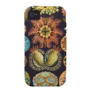 Ernst Haeckel - Ascidiae Case-Mate iPhone 4 Covers