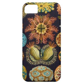 Ernst Haeckel - Ascidiae iPhone 5 Covers