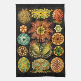 Ernst Haeckel Ascidiae Sea Life Illustration Hand Towel