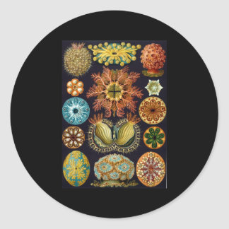 Ernst Haeckel Ascidiae Round Stickers