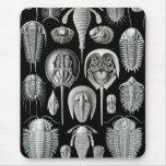Ernst Haeckel - Aspidonia Alfombrillas De Ratón