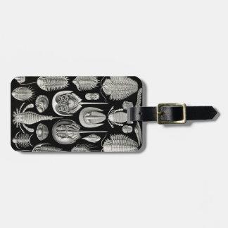 Ernst Haeckel Aspidonia Bag Tag