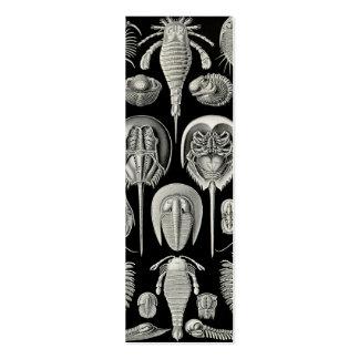 Ernst Haeckel Aspidonia Business Card Templates