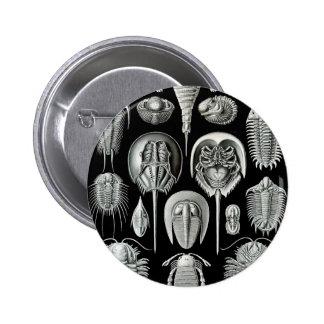 Ernst Haeckel - Aspidonia Button