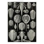 Ernst Haeckel - Aspidonia Card
