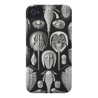 Ernst Haeckel - Aspidonia iPhone 4 Cases