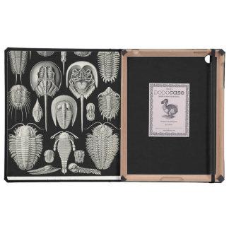 Ernst Haeckel Aspidonia Case For iPad