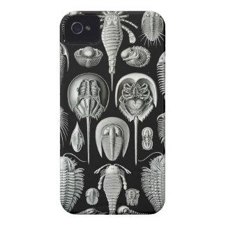 Ernst Haeckel - Aspidonia Case-Mate iPhone 4 Cases