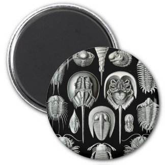 Ernst Haeckel - Aspidonia Imán Redondo 5 Cm