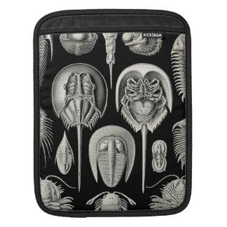 Ernst Haeckel Aspidonia iPad Sleeve