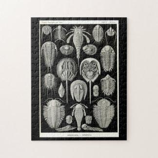 Ernst Haeckel Aspidonia Jigsaw Puzzle