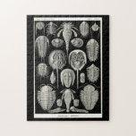 Ernst Haeckel Aspidonia Jigsaw Puzzles