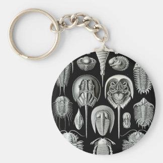 Ernst Haeckel - Aspidonia Keychain