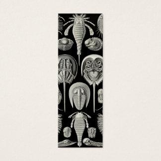 Ernst Haeckel Aspidonia Mini Business Card