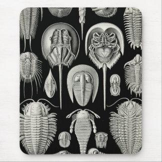 Ernst Haeckel Aspidonia Mouse Pad