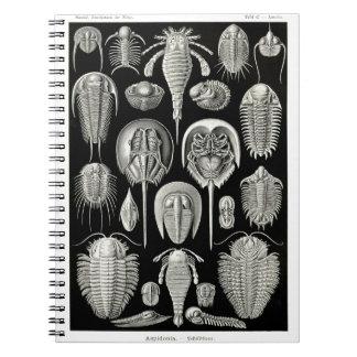 Ernst Haeckel Aspidonia Spiral Note Book
