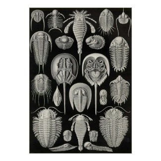 Ernst Haeckel - Aspidonia Impresiones
