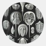 Ernst Haeckel - Aspidonia Pegatina Redonda