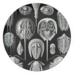Ernst Haeckel - Aspidonia Plates