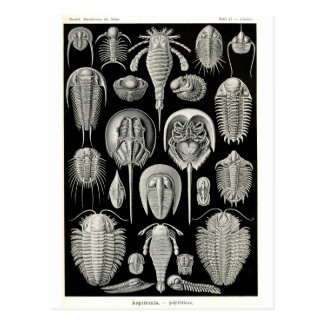 Ernst Haeckel Aspidonia Postcard