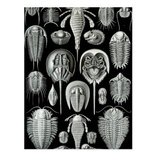 Ernst Haeckel - Aspidonia Postcard