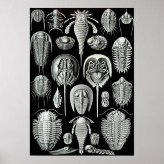 Ernst Haeckel - Aspidonia Print