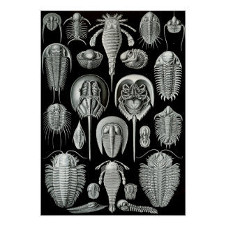 Ernst Haeckel - Aspidonia Poster