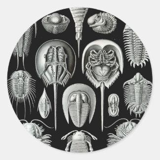 Ernst Haeckel - Aspidonia Classic Round Sticker