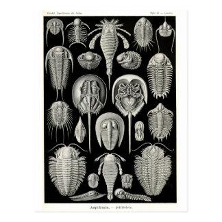 Ernst Haeckel Aspidonia Postal