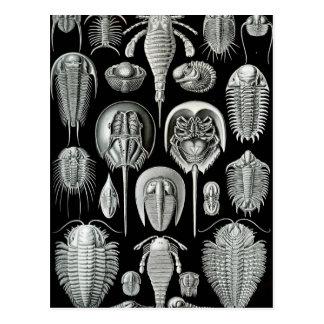 Ernst Haeckel - Aspidonia Tarjeta Postal