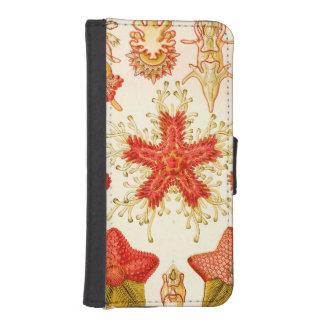 Ernst Haeckel Asteridea iPhone SE/5/5s Wallet