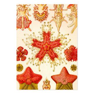 Ernst Haeckel Asteridea Large Business Card