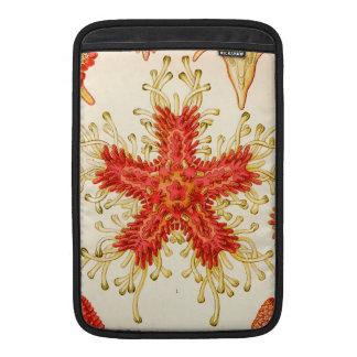 Ernst Haeckel Asteridea MacBook Sleeve
