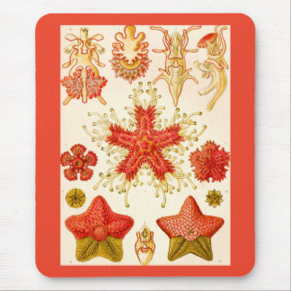 Ernst Haeckel Asteridea Mouse Pad
