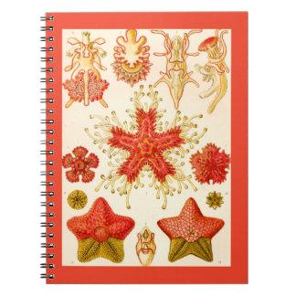 Ernst Haeckel Asteridea Spiral Note Book