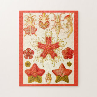 Ernst Haeckel Asteridea Jigsaw Puzzle