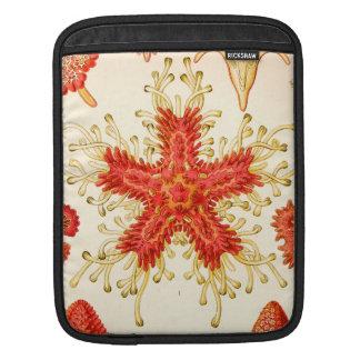 Ernst Haeckel Asteridea Sleeve For iPads