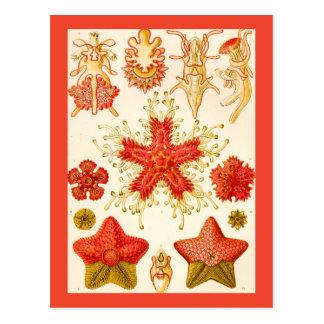 Ernst Haeckel Asteridea Tarjetas Postales