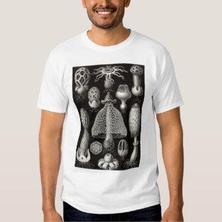 Ernst Haeckel - Basimycetes Mushrooms Tee Shirt