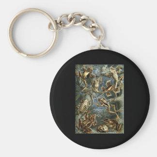 Ernst Haeckel Batrachia Basic Round Button Keychain