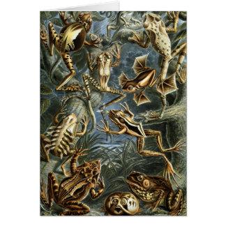 Ernst Haeckel - Batrachia Card