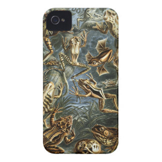 Ernst Haeckel - Batrachia Case-Mate iPhone 4 Case