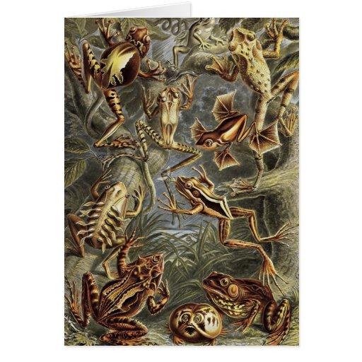 Ernst Haeckel - Batrachia Frogs Card