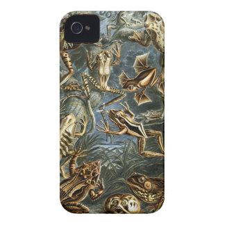 Ernst Haeckel - Batrachia iPhone 4 Case-Mate Case