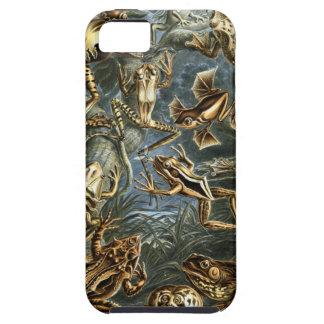 Ernst Haeckel - Batrachia iPhone 5 Cases