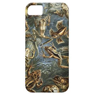 Ernst Haeckel - Batrachia iPhone 5 Covers