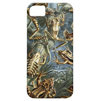 Ernst Haeckel Batrachia iPhone SE/5/5s Case