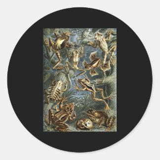 Ernst Haeckel Batrachia Sticker