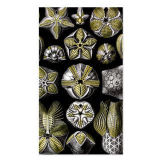 Ernst Haeckel Blastoidea Business Card