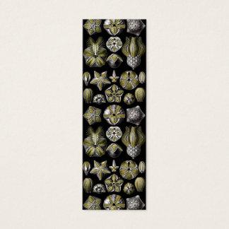 Ernst Haeckel Blastoidea Mini Business Card